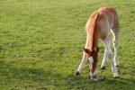 Young Horse Grassy Field